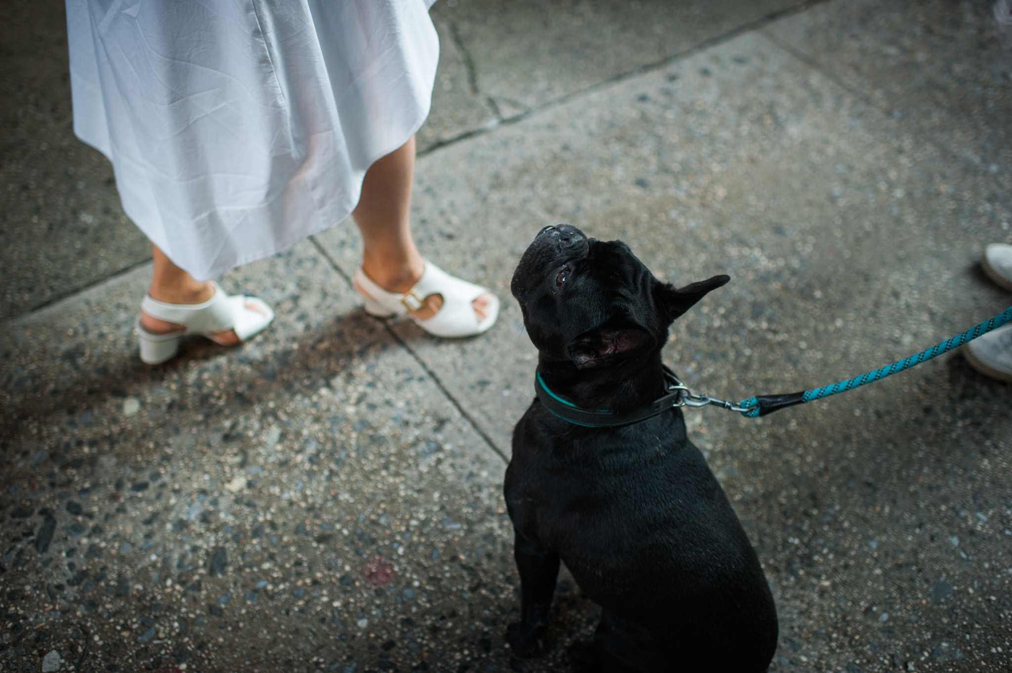 Portrait with French bulldog in NYC by Erin Borzellino